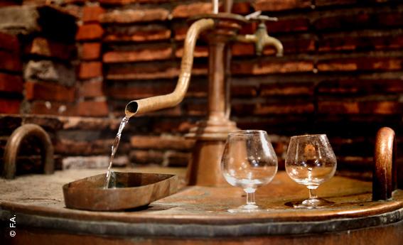 Distillation Ognoas
